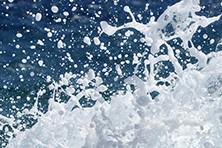 Belebende Meeresnoten